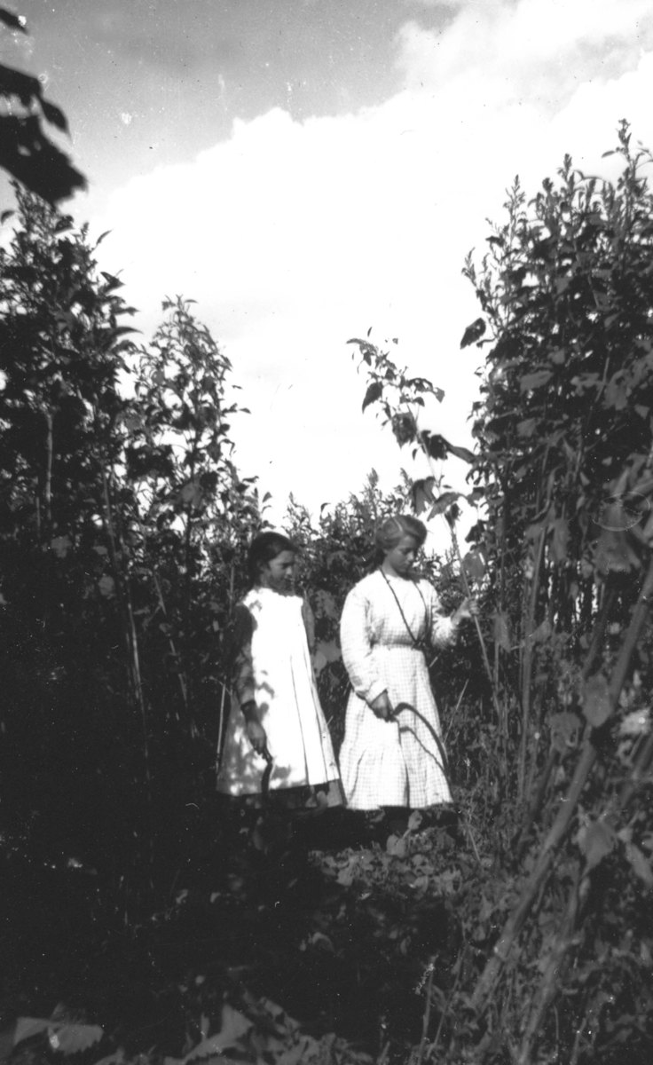 90.148, picking sunflowers.jpg
