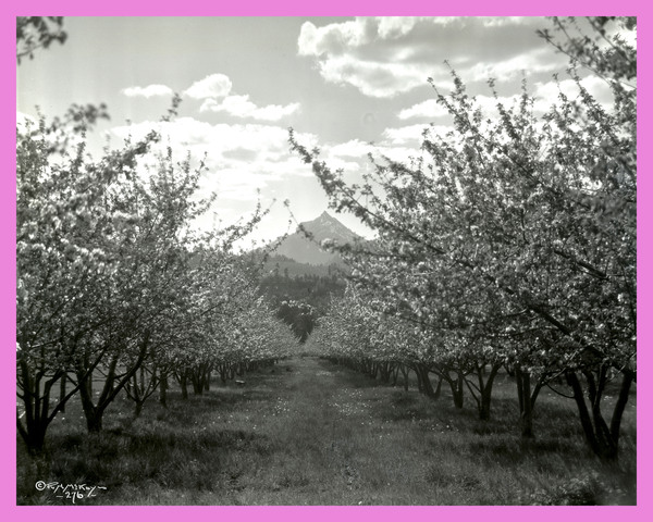 Orchard in the Bitterroot