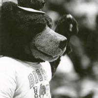 Monte, the University of Montana mascot with a bear hat.
