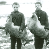 Raymond and Gilbert Lord with dead coyotes