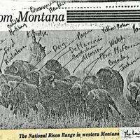 Clipping of bison annotated by Patricia Goedicke