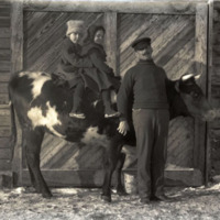 Agnes and Theo on a heifer, Glacier