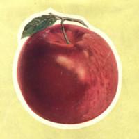 large charlo apple reverse.jpg